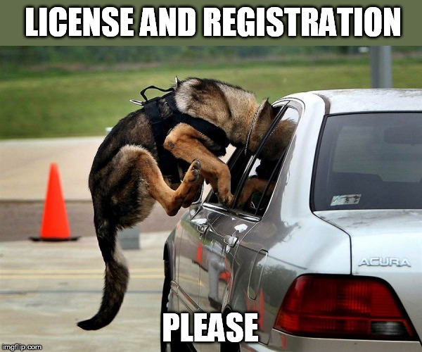 LICENSE AND REGISTRATION PLEASE | made w/ Imgflip meme maker