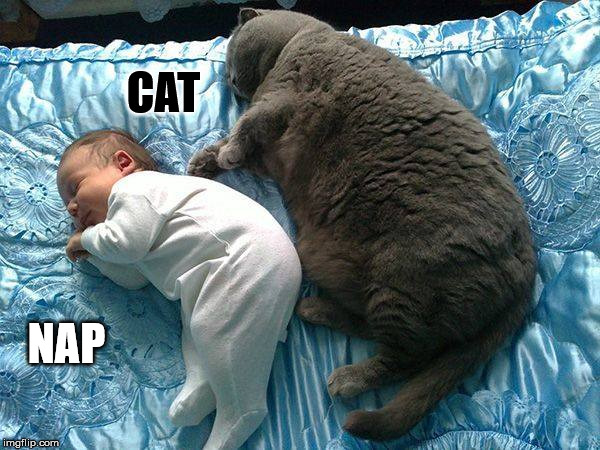 Cat.... |  CAT; NAP | image tagged in cat nap,baby,sleep,nap,spoon,peaceful | made w/ Imgflip meme maker