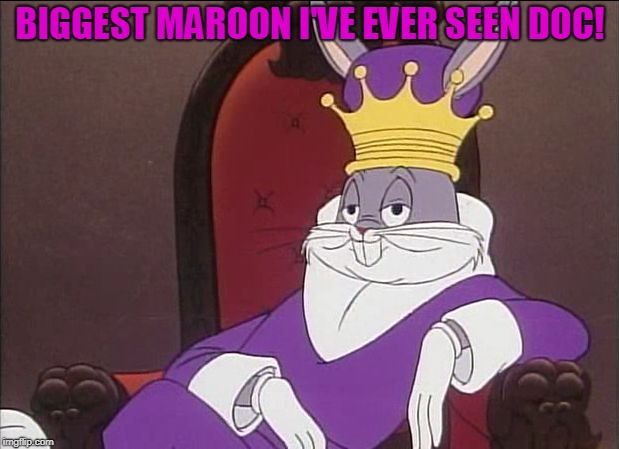 Bugs Bunny | BIGGEST MAROON I'VE EVER SEEN DOC! | image tagged in bugs bunny | made w/ Imgflip meme maker