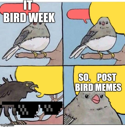 annoyed bird |  IT BIRD WEEK; SO.    POST BIRD MEMES | image tagged in annoyed bird | made w/ Imgflip meme maker