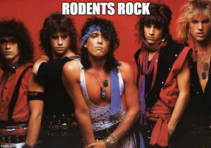 Ratt | RODENTS ROCK | image tagged in ratt | made w/ Imgflip meme maker