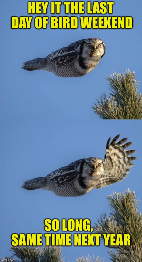 Bird Weekend February 1-3, a moemeobro, claybourne, and 1forpiece event - When's the next one?? | HEY IT THE LAST DAY OF BIRD WEEKEND SO LONG,   SAME TIME NEXT YEAR | image tagged in memes,bird weekend,bird,owl,waving | made w/ Imgflip meme maker