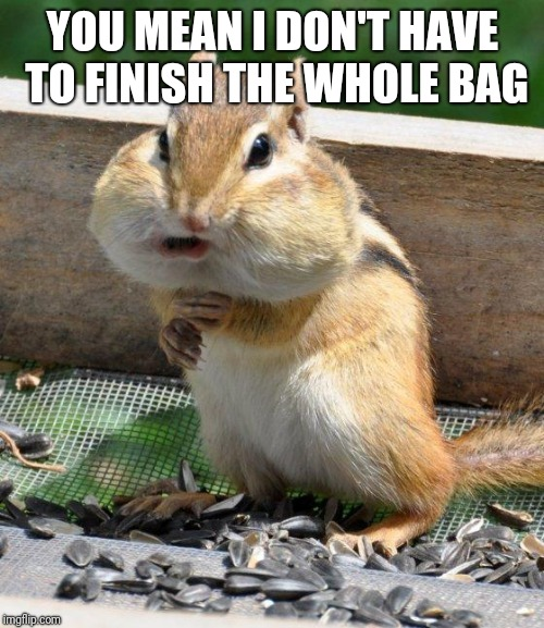 chipmunk | YOU MEAN I DON'T HAVE TO FINISH THE WHOLE BAG | image tagged in chipmunk | made w/ Imgflip meme maker