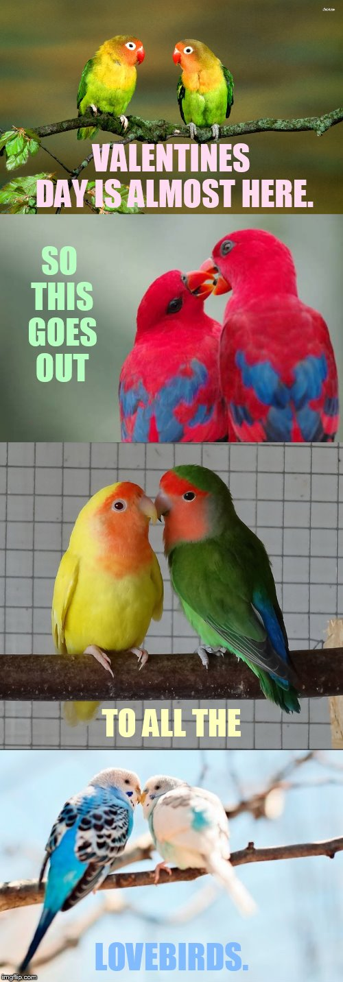 Bird Weekend February 1-3, a moemeobro, Claybourne, and 1forpeace Event | VALENTINES DAY IS ALMOST HERE. LOVEBIRDS. SO THIS GOES OUT TO ALL THE | image tagged in memes,valentines day,almost,here,you,lovebirds | made w/ Imgflip meme maker