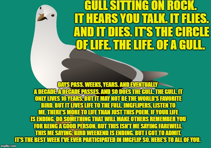 A seagull of a poem for all. Not just the bird lovers. | GULL SITTING ON ROCK. IT HEARS YOU TALK. IT FLIES. AND IT DIES. IT'S THE CIRCLE OF LIFE. THE LIFE. OF A GULL. DAYS PASS. WEEKS, YEARS. AND E | image tagged in poetry,bird weekend | made w/ Imgflip meme maker