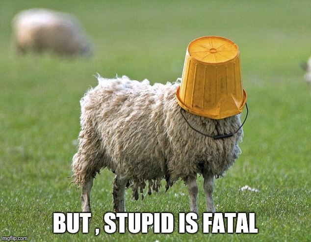 stupid sheep | BUT , STUPID IS FATAL | image tagged in stupid sheep | made w/ Imgflip meme maker