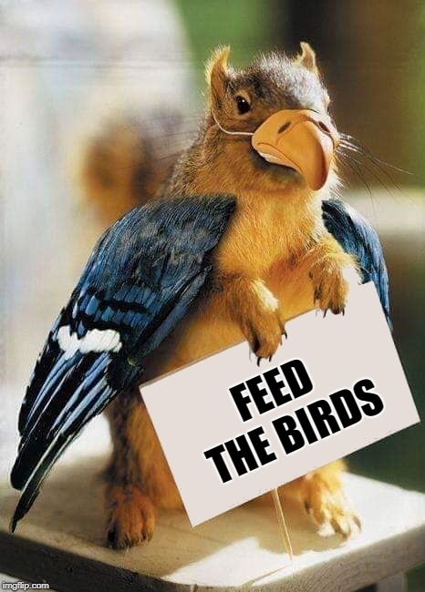 whatever works | FEED THE BIRDS | image tagged in squirrel,feed the birds,disguise | made w/ Imgflip meme maker