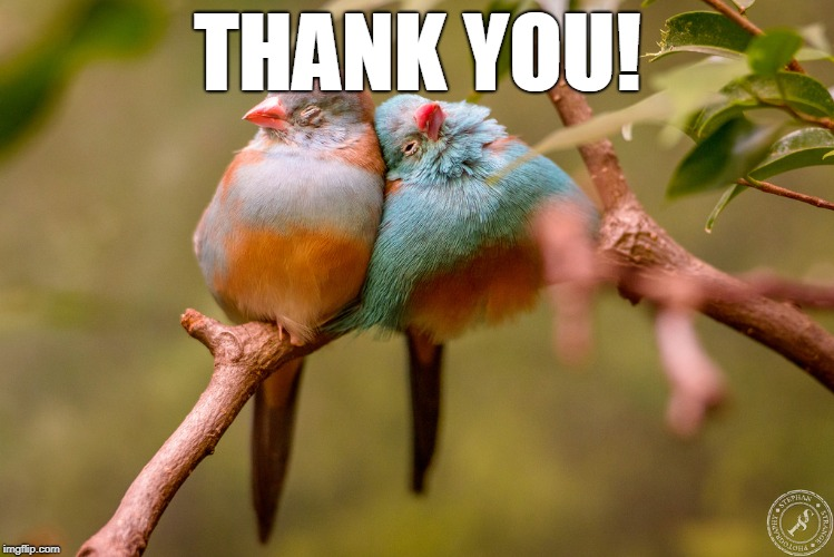 Cuddling Birds | THANK YOU! | image tagged in cuddling birds | made w/ Imgflip meme maker