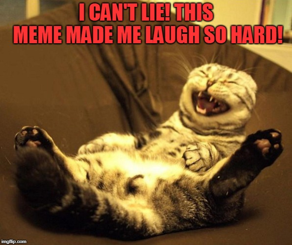 laughing cat | I CAN'T LIE! THIS MEME MADE ME LAUGH SO HARD! | image tagged in laughing cat | made w/ Imgflip meme maker
