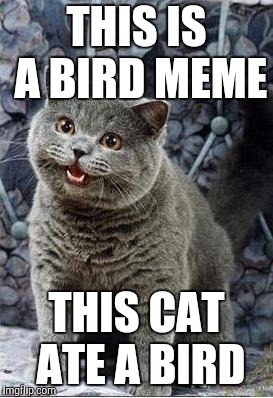 I can has cheezburger cat |  THIS IS A BIRD MEME; THIS CAT ATE A BIRD | image tagged in i can has cheezburger cat | made w/ Imgflip meme maker