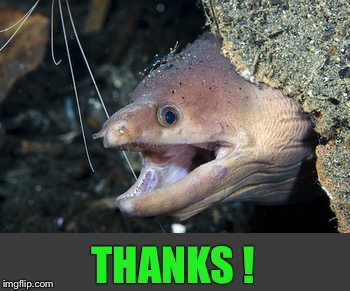 Happy Eel | THANKS ! | image tagged in happy eel | made w/ Imgflip meme maker