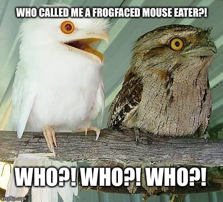 Who?! | WHO CALLED ME A FROGFACED MOUSE EATER?! WHO?! WHO?! WHO?! | image tagged in albino owl,bird weekend | made w/ Imgflip meme maker