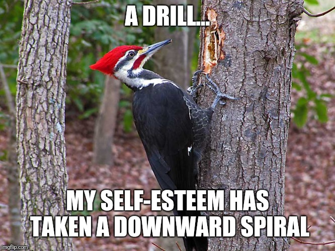 A DRILL... MY SELF-ESTEEM HAS TAKEN A DOWNWARD SPIRAL | made w/ Imgflip meme maker