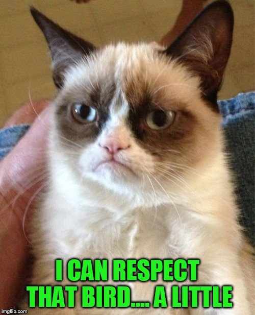 Grumpy Cat Meme | I CAN RESPECT THAT BIRD.... A LITTLE | image tagged in memes,grumpy cat | made w/ Imgflip meme maker