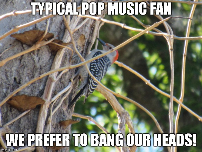 TYPICAL POP MUSIC FAN WE PREFER TO BANG OUR HEADS! | made w/ Imgflip meme maker