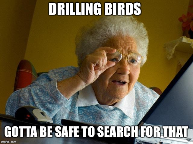 Grandma Finds The Internet Meme | DRILLING BIRDS GOTTA BE SAFE TO SEARCH FOR THAT | image tagged in memes,grandma finds the internet | made w/ Imgflip meme maker