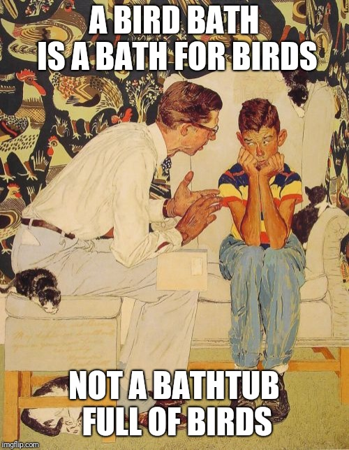Yikes, what happened to the birds? |  A BIRD BATH IS A BATH FOR BIRDS; NOT A BATHTUB FULL OF BIRDS | image tagged in memes,the probelm is,birds,bird weekend,bird bath,bird | made w/ Imgflip meme maker