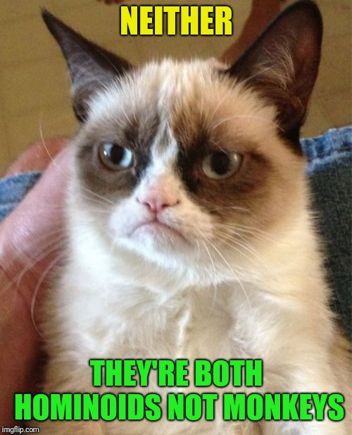 Grumpy Cat Meme | NEITHER THEY'RE BOTH HOMINOIDS NOT MONKEYS | image tagged in memes,grumpy cat | made w/ Imgflip meme maker