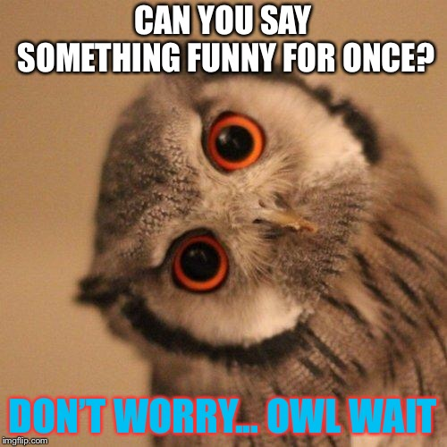 inquisitve owl | CAN YOU SAY SOMETHING FUNNY FOR ONCE? DON'T WORRY... OWL WAIT | image tagged in inquisitve owl | made w/ Imgflip meme maker