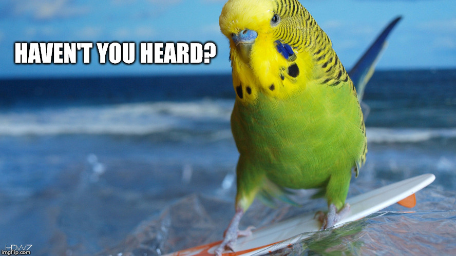 Cuz everybody knows... | HAVEN'T YOU HEARD? | image tagged in surfing,bird | made w/ Imgflip meme maker