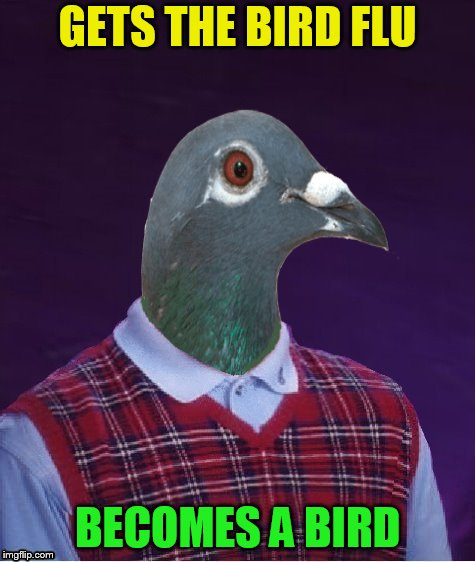 Bad Luck Bird | GETS THE BIRD FLU BECOMES A BIRD | image tagged in bad luck bird | made w/ Imgflip meme maker