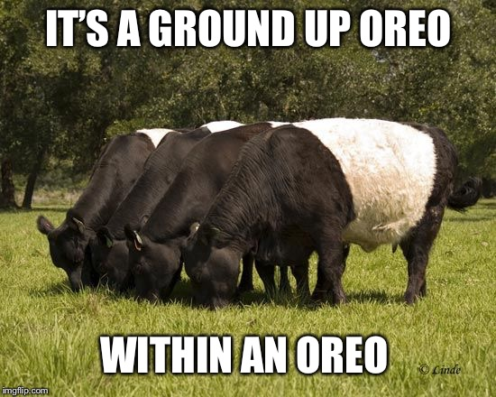 oreo cattle | IT'S A GROUND UP OREO WITHIN AN OREO | image tagged in oreo cattle | made w/ Imgflip meme maker