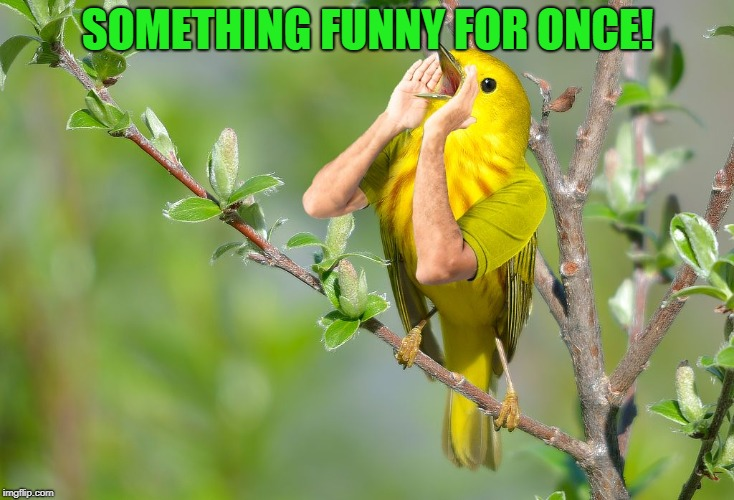Yelling Bird | SOMETHING FUNNY FOR ONCE! | image tagged in yelling bird | made w/ Imgflip meme maker