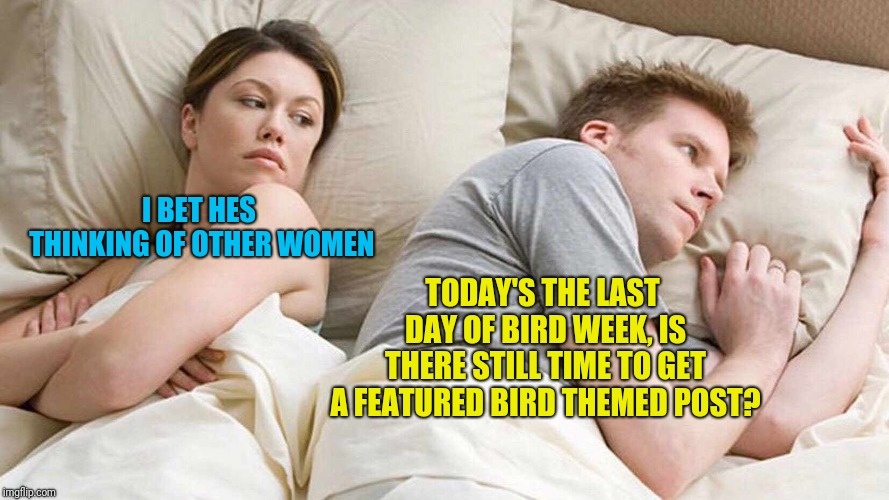 (Hope it's not too late to chirp in!)Bird Weekend February 1-3, a moemeobro, Claybourne, and 1forpeace Event  | I BET HES THINKING OF OTHER WOMEN TODAY'S THE LAST DAY OF BIRD WEEK, IS THERE STILL TIME TO GET A FEATURED BIRD THEMED POST? | image tagged in i bet he's thinking about other women,bird weekend,bird,funny,memes,funny memes | made w/ Imgflip meme maker