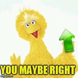 big bird 1 | YOU MAYBE RIGHT | image tagged in big bird 1 | made w/ Imgflip meme maker