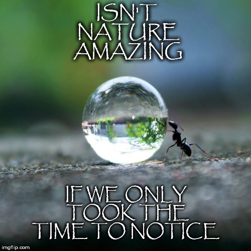 If We Only.... | ISN'T NATURE AMAZING IF WE ONLY TOOK THE TIME TO NOTICE | image tagged in ant,water,drop,nature,time,notice | made w/ Imgflip meme maker