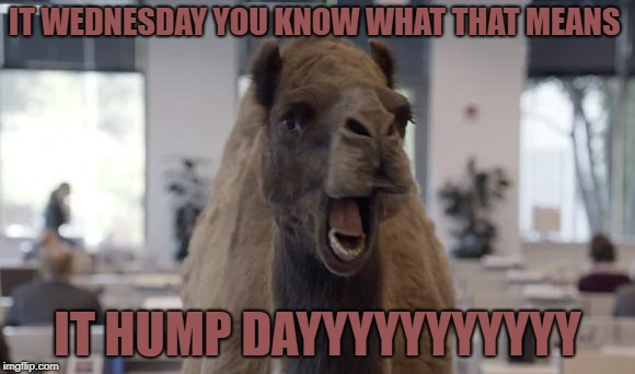 Hump Day Camel | IT WEDNESDAY YOU KNOW WHAT THAT MEANS IT HUMP DAYYYYYYYYYYY | image tagged in hump day camel | made w/ Imgflip meme maker