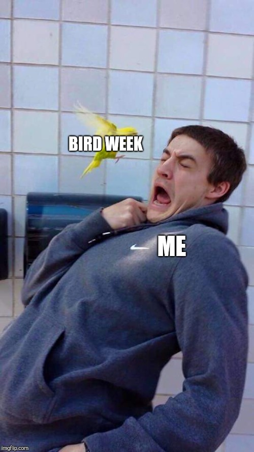 BIRD WEEK ME | image tagged in yellow bird's revenge | made w/ Imgflip meme maker
