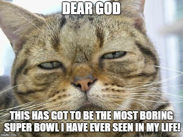 Sleepy Cat | DEAR GOD THIS HAS GOT TO BE THE MOST BORING SUPER BOWL I HAVE EVER SEEN IN MY LIFE! | image tagged in sleepy cat | made w/ Imgflip meme maker