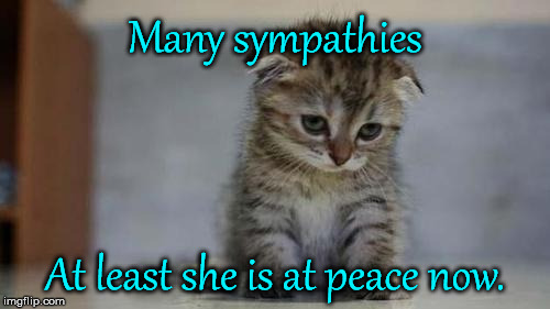 Sad kitten | Many sympathies At least she is at peace now. | image tagged in sad kitten | made w/ Imgflip meme maker
