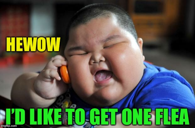 fat chinese kid | HEWOW I'D LIKE TO GET ONE FLEA | image tagged in fat chinese kid | made w/ Imgflip meme maker