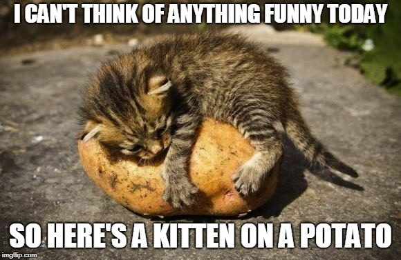 I got nothing | I CAN'T THINK OF ANYTHING FUNNY TODAY SO HERE'S A KITTEN ON A POTATO | image tagged in kitten,potato | made w/ Imgflip meme maker