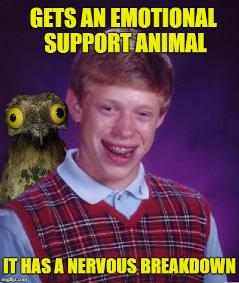Too much to deal with | GETS AN EMOTIONAL SUPPORT ANIMAL IT HAS A NERVOUS BREAKDOWN | image tagged in funny memes,bad luck brian,support,animal | made w/ Imgflip meme maker