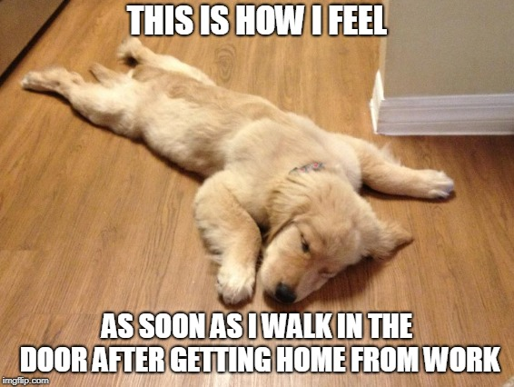 Old Tired Dog | THIS IS HOW I FEEL AS SOON AS I WALK IN THE DOOR AFTER GETTING HOME FROM WORK | image tagged in dog,hardworking guy | made w/ Imgflip meme maker