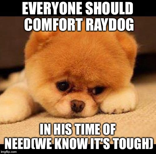 sad dog | EVERYONE SHOULD COMFORT RAYDOG IN HIS TIME OF NEED(WE KNOW IT'S TOUGH) | image tagged in sad dog | made w/ Imgflip meme maker