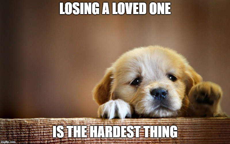This is for raydog, im so sorry man | LOSING A LOVED ONE IS THE HARDEST THING | image tagged in sad dog | made w/ Imgflip meme maker