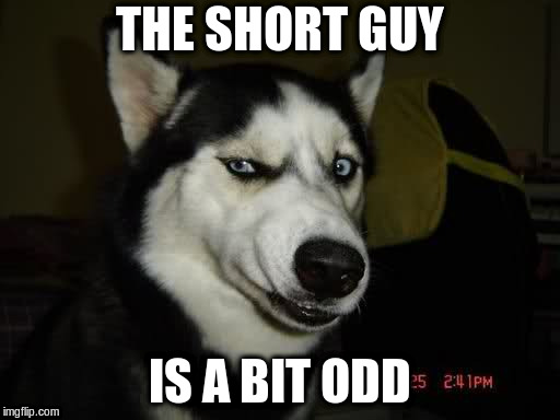 WTF Husky  | THE SHORT GUY IS A BIT ODD | image tagged in wtf husky | made w/ Imgflip meme maker
