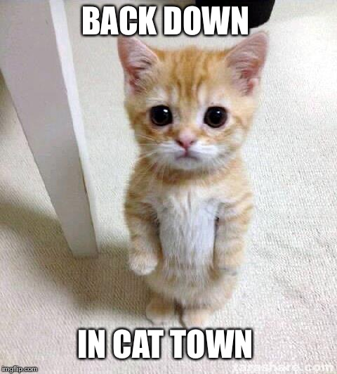 Cute Cat | BACK DOWN IN CAT TOWN | image tagged in memes,cute cat | made w/ Imgflip meme maker