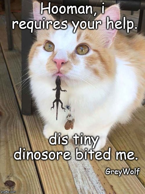 Hooman, i requires your help. dis tiny dinosore bited me. GreyWolf | image tagged in cats | made w/ Imgflip meme maker