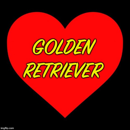 Heart | GOLDEN RETRIEVER | image tagged in heart | made w/ Imgflip meme maker
