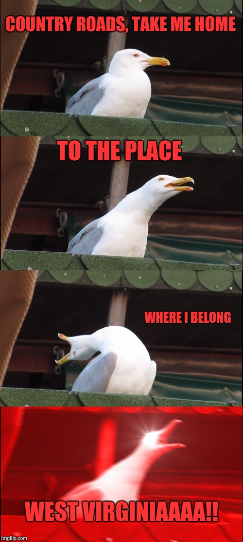 Who else had this song stuck in thier head? Lol | COUNTRY ROADS, TAKE ME HOME TO THE PLACE WHERE I BELONG WEST VIRGINIAAAA!! | image tagged in memes,inhaling seagull,song | made w/ Imgflip meme maker