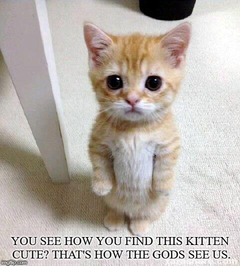 Cute Kitty | YOU SEE HOW YOU FIND THIS KITTEN CUTE? THAT'S HOW THE GODS SEE US. | image tagged in cute cat,gods,humans,kitten,lovable,mortals | made w/ Imgflip meme maker