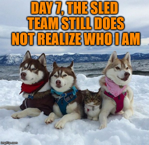 Fitting in. | . | image tagged in meme,dogs,cute dogs | made w/ Imgflip meme maker