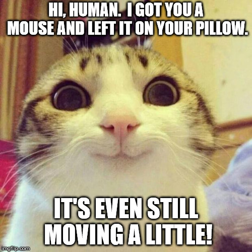 Gift from Smiling Cat | HI, HUMAN.  I GOT YOU A MOUSE AND LEFT IT ON YOUR PILLOW. IT'S EVEN STILL MOVING A LITTLE! | image tagged in memes,smiling cat | made w/ Imgflip meme maker