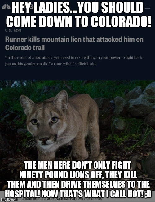 Mountain Lion Colorado | HEY LADIES...YOU SHOULD COME DOWN TO COLORADO! THE MEN HERE DON'T ONLY FIGHT NINETY POUND LIONS OFF, THEY KILL THEM AND THEN DRIVE THEMSELVE | image tagged in colorado,mountain lion,cougar,pumba,lion,hiking | made w/ Imgflip meme maker