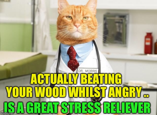 Cat Doctor | ACTUALLY BEATING YOUR WOOD WHILST ANGRY .. IS A GREAT STRESS RELIEVER | image tagged in cat doctor | made w/ Imgflip meme maker